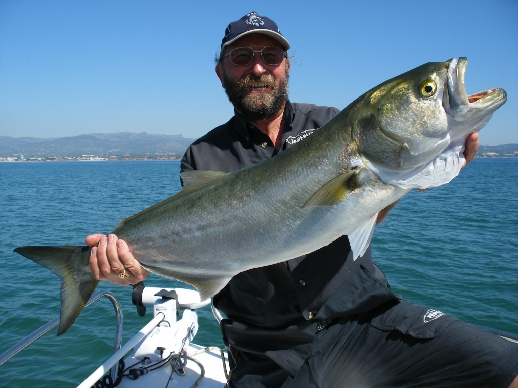 Bluefish caught with light tackle and popper for Blue fish rig