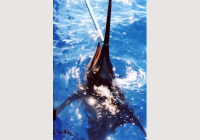 img-1708-pesca.png