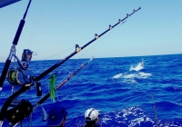 img-4587-Fishing-in-Canary-Islands.jpg