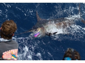 Blue-Marlin-Fishing-in-Mindelo-Sao-Vicente-Cabo-Verde.jpg