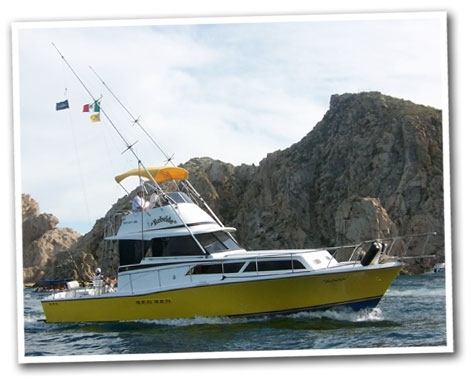 Sport fishing in los cabos mexico for Los cabos fishing charters