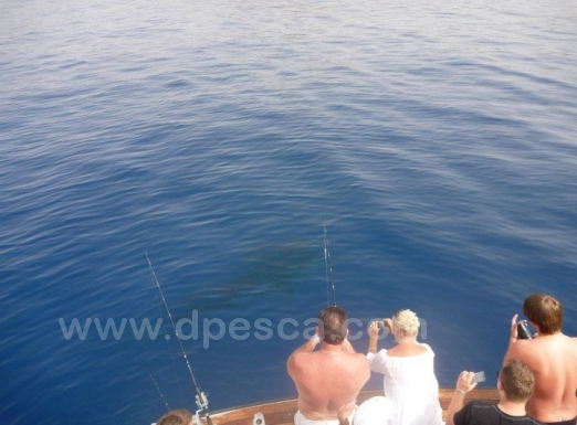 Deep-sea-fishing-in-Tenerife.jpg